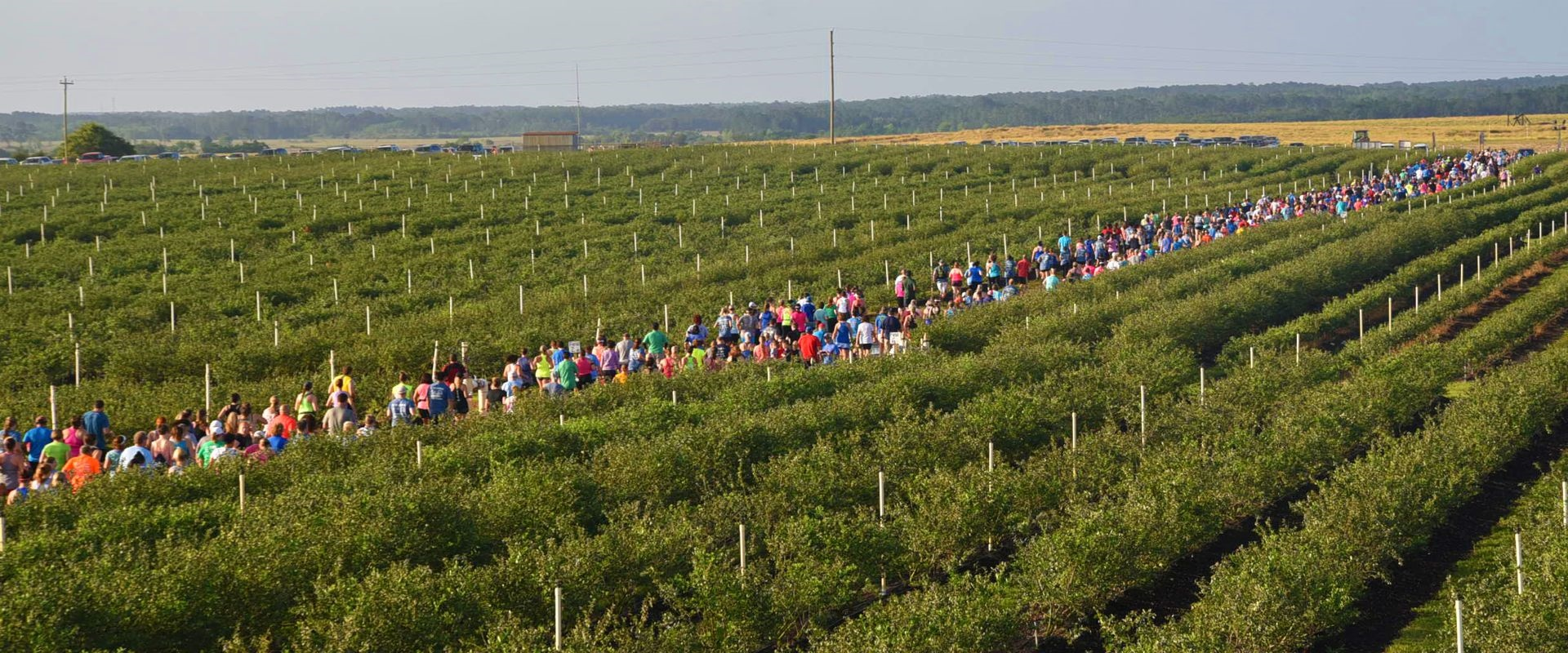 U-RUN, U-PICK, BLUEBERRY 5K - April 27